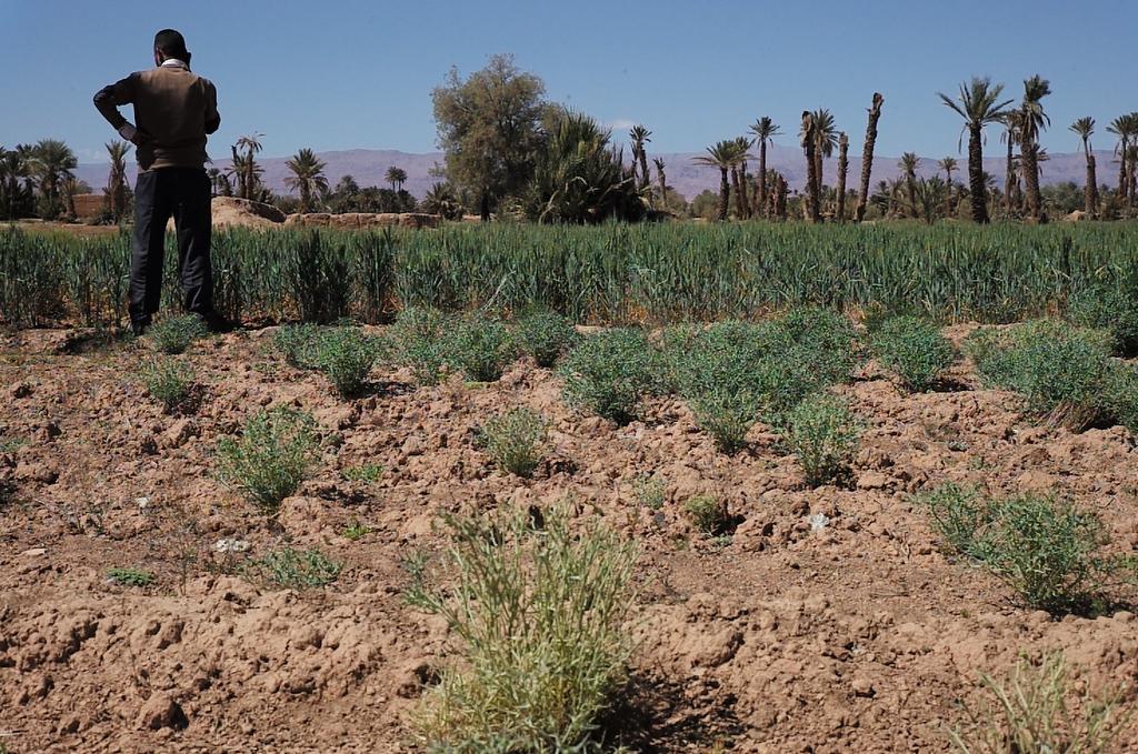 desertificat-1510072224-3.jpg