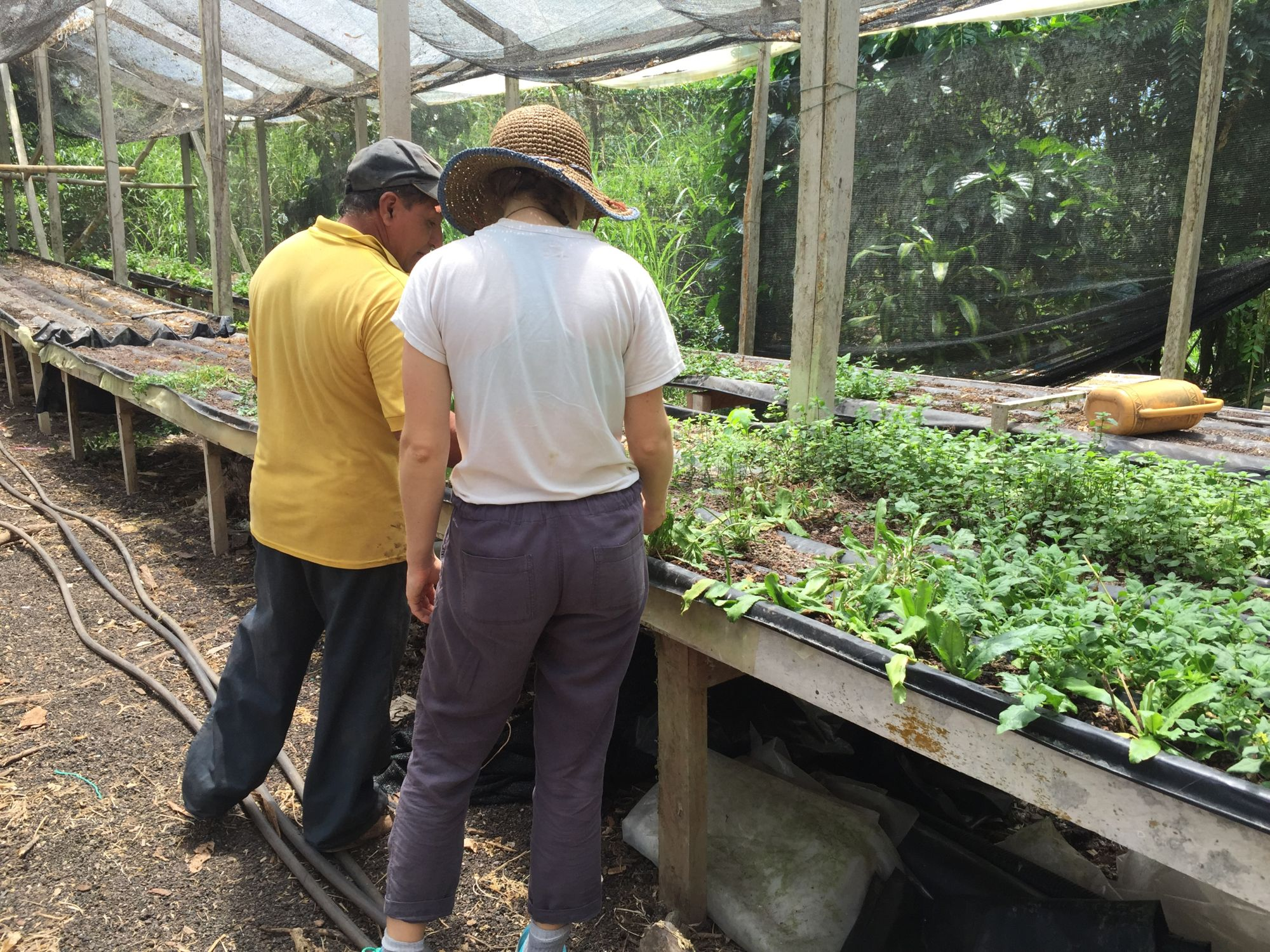 Vicente's hydroponics system